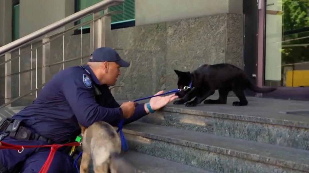 Policyjny psiak ma łapać bandytów. Na razie boi się schodów