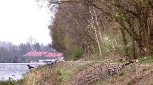 Białołęka wygrywa walkę o drzewa. Minister: więcej nasadzeń w dzielnicy
