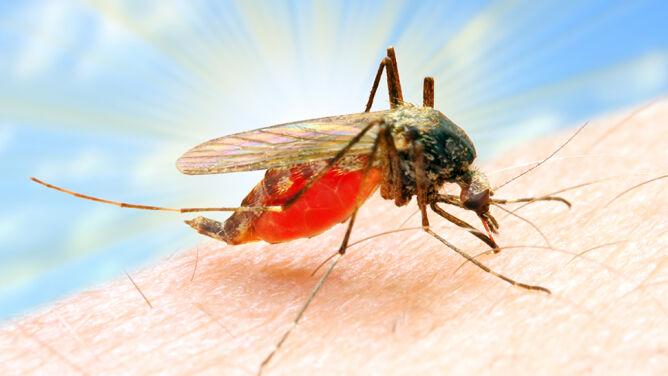 Naukowcy przechytrzyli komary. Lek, który może zatrzymać malarię
