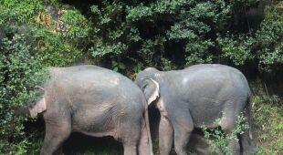 W wodospadzie utopiło się sześć słoni (PAP/EPA/DNP HANDOUT)