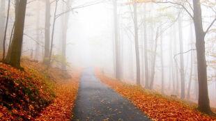Idzie jesień. Jaka czeka nas pogoda