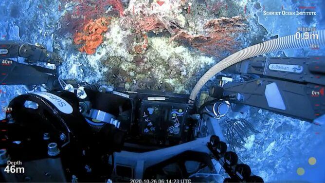 Odkryto nową rafę koralową. Pierwszy raz od ponad wieku